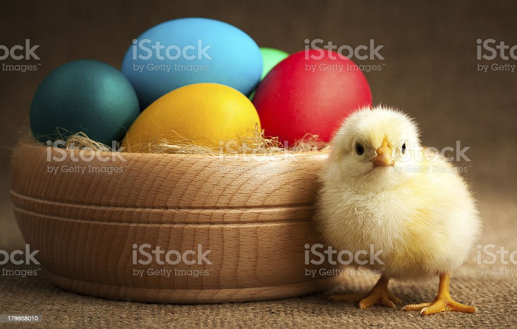 cute small chick with easter eggs royalty-free stock photo
