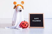 istock cute small dog is wearing a ghost costume for halloween at home. pumpkin and a letter board next to him. Pets indoors 1209456988