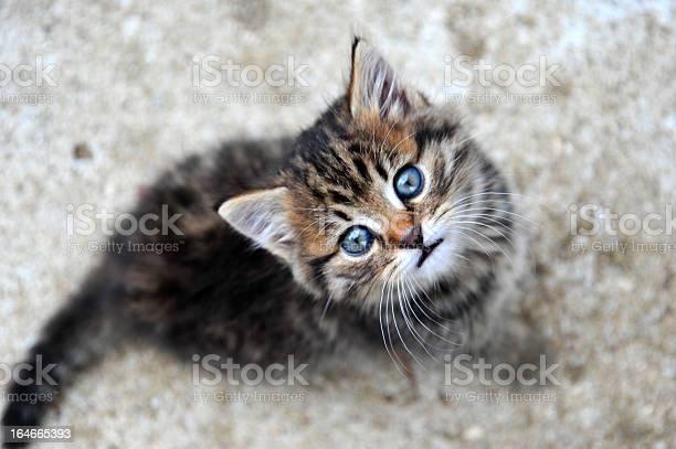 Cute small kitten picture id164665393?b=1&k=6&m=164665393&s=612x612&h=fasrxaej9j7hkbl1b5kkj nx9ueaenufmvksrudqmxq=
