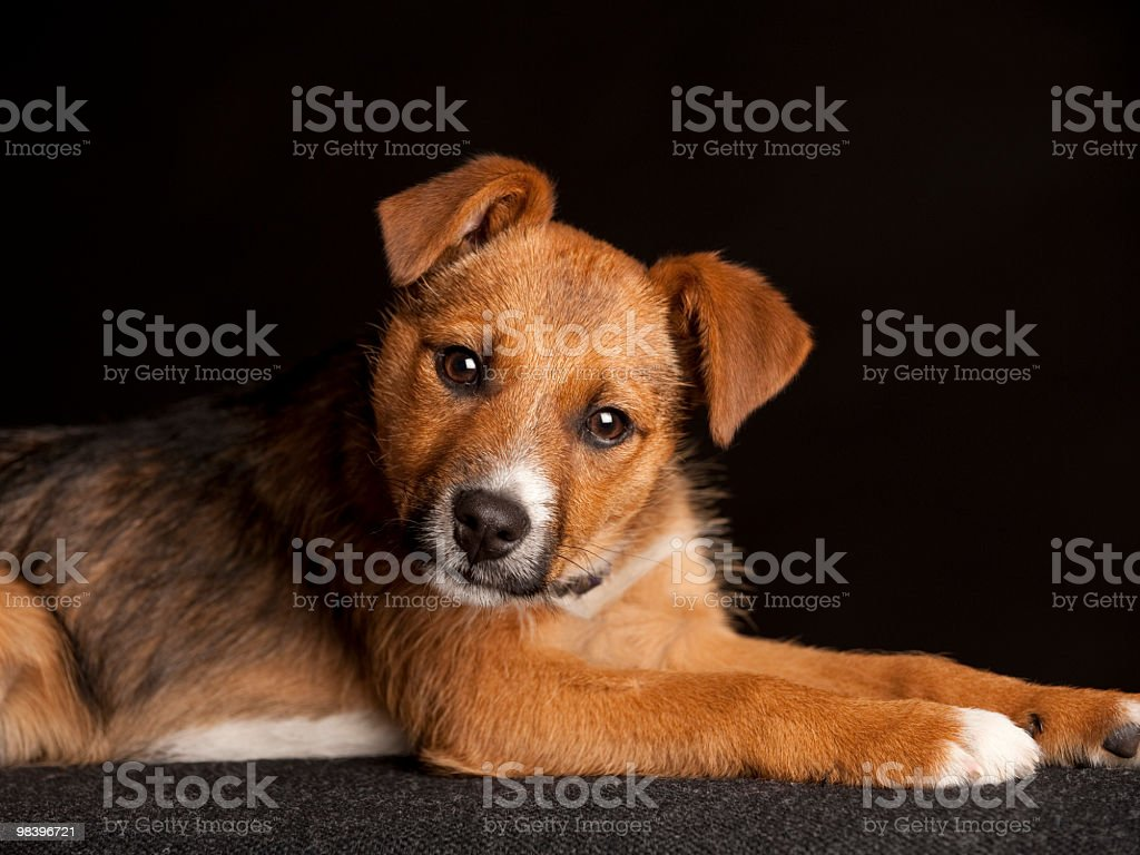 Cute small puppy royalty-free stock photo