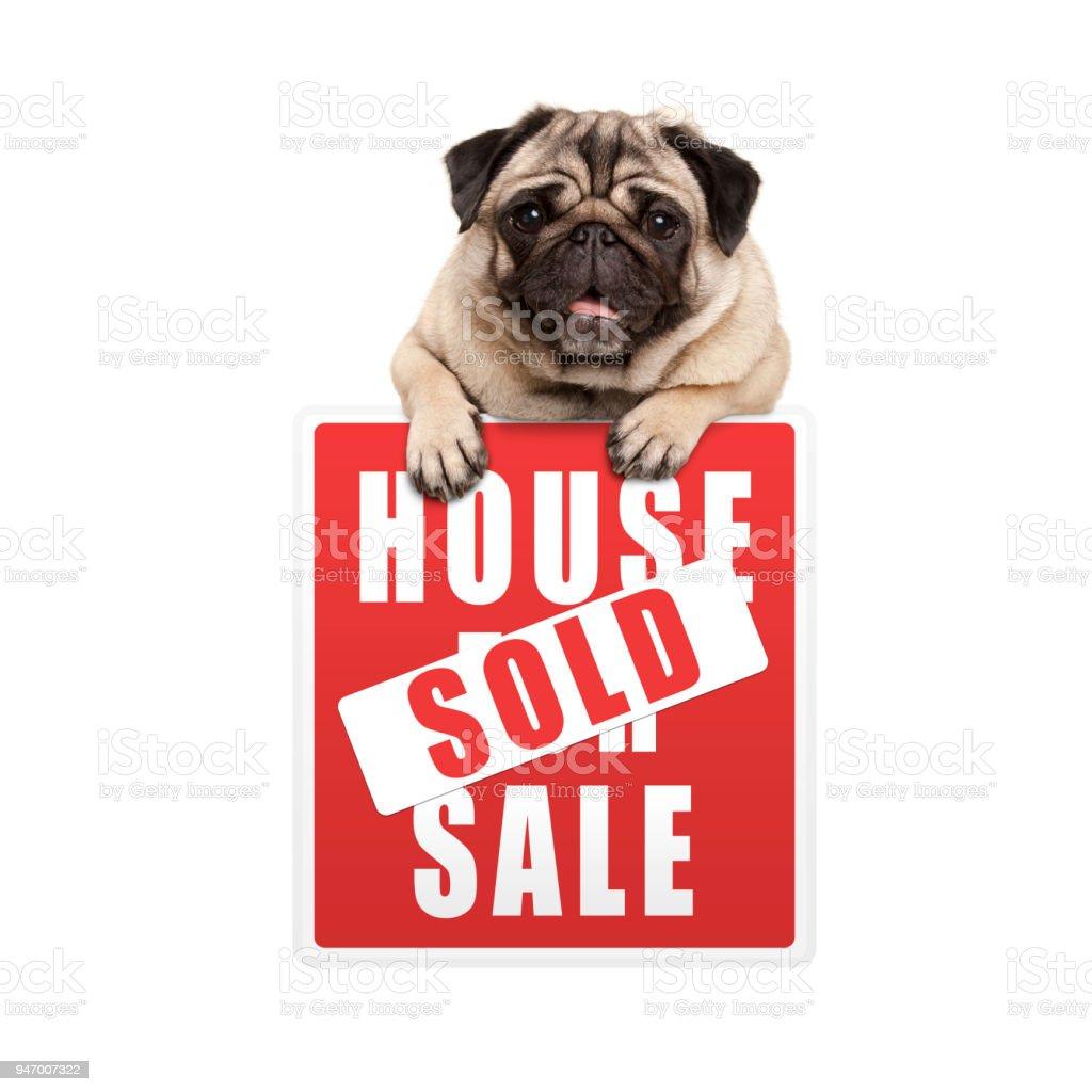 schattige lachende pug puppy hond opknoping met paws op rode huis verkocht teken foto