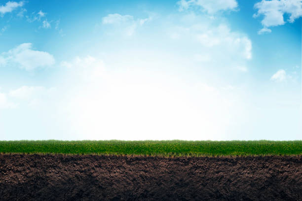 Cute soil and grass in meadow. stock photo