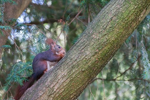 cute squirrel climbing the tree