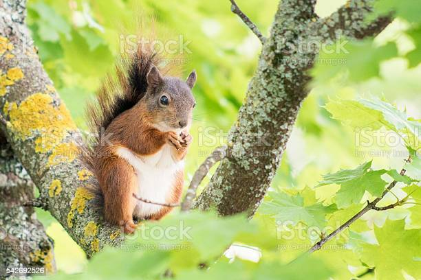 Photo of Cute squirrel eating a nut on a branch