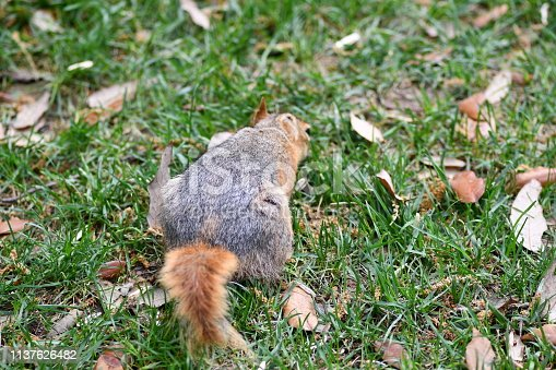 istock Cute squirrel sitting on the tree eat nut. 1137626482