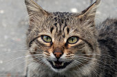 Cute stray cat face, portrait