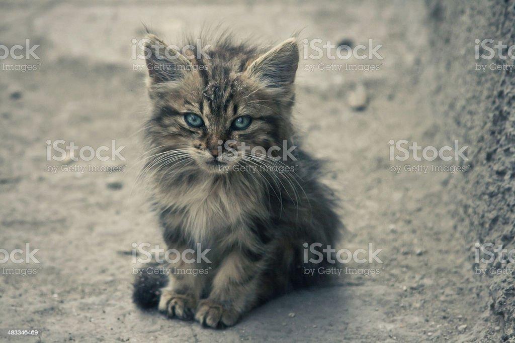 Cute stray cat stock photo