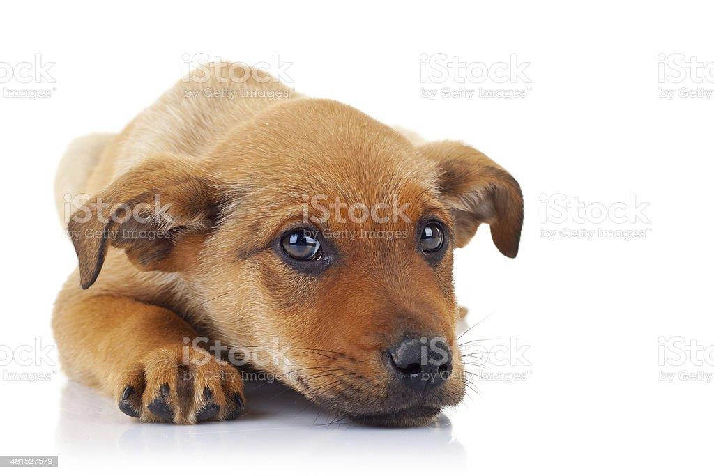 cute stray puppy dog stock photo