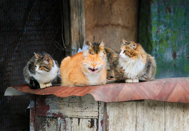 gatos de ruas bonitos com caretas grupo no celeiro de lie - foto de acervo