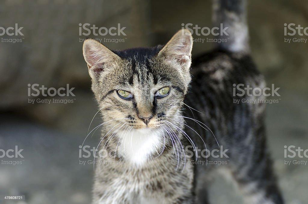 Cute street kitten outdoors. royalty-free stock photo