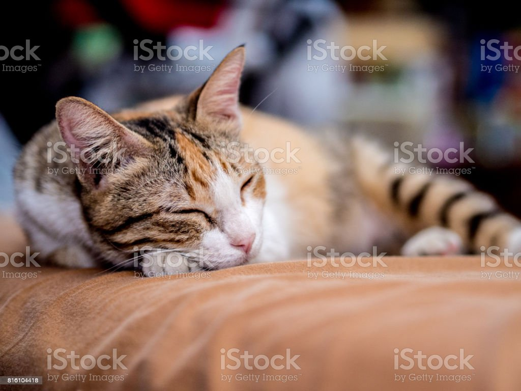 Gato bonito listrado sono na cama foto royalty-free