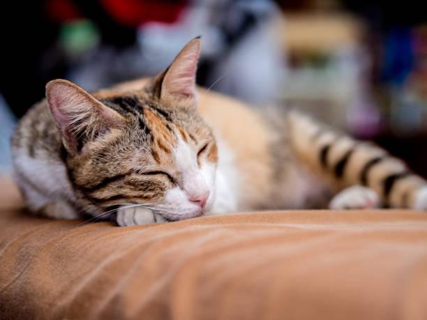 Gato bonito listrado sono na cama - foto de acervo