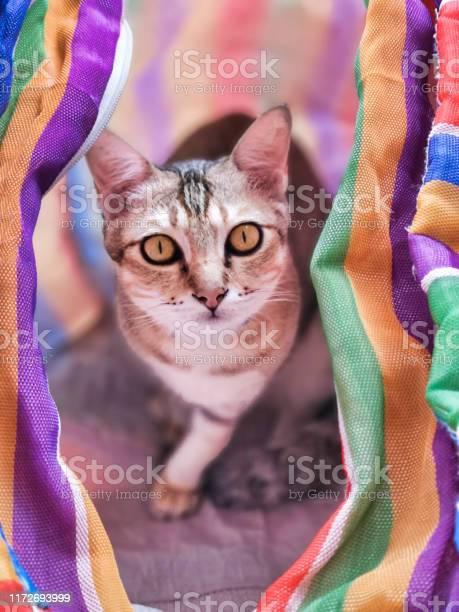 Cute striped kitten hiding in colorful striped laundry bag picture id1172693999?b=1&k=6&m=1172693999&s=612x612&h=qz laawmvwxfm6oadxk1ibg4eglmw rlvl2mr r 8qc=