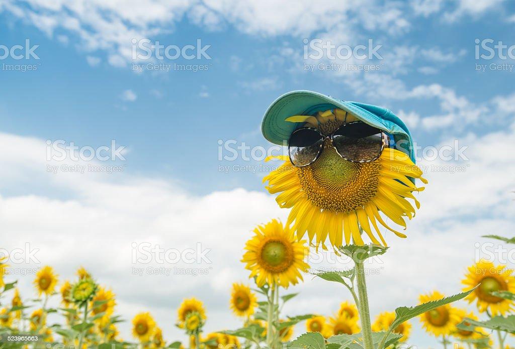 cute sunflower ware glasses stock photo