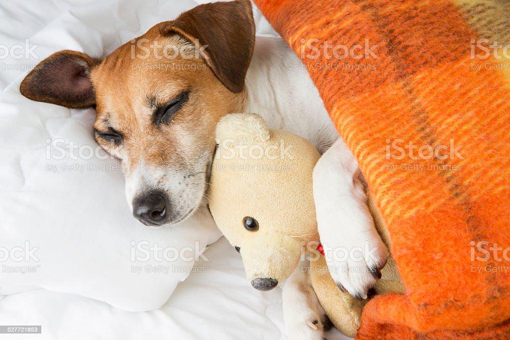 cute Sweet dreams stock photo