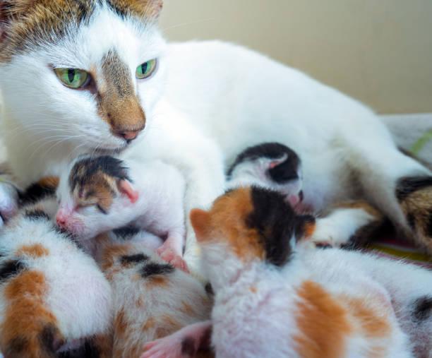 Cute sweet pet animal kitty and mom cat picture id1079922610?b=1&k=6&m=1079922610&s=612x612&w=0&h=ig5wzqug3jzz4uwibd0qubjy8yv3y6s4r1ajxftandk=
