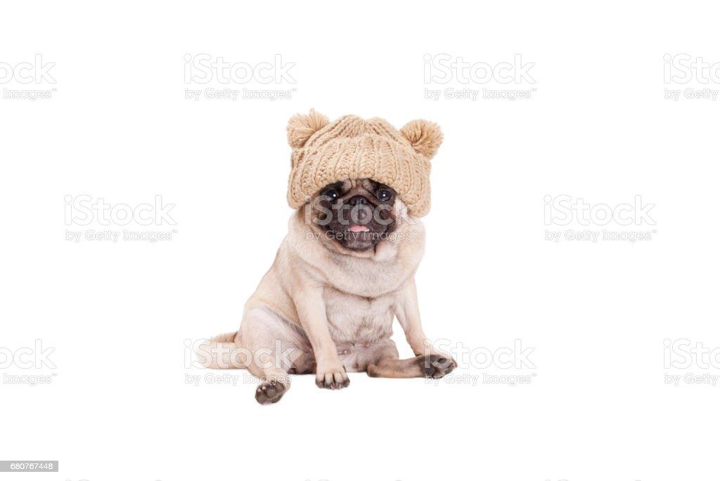 schattig zoete pug puppy hondje zitten glimlachen, het dragen van gebreide muts, geïsoleerd op witte achtergrond foto