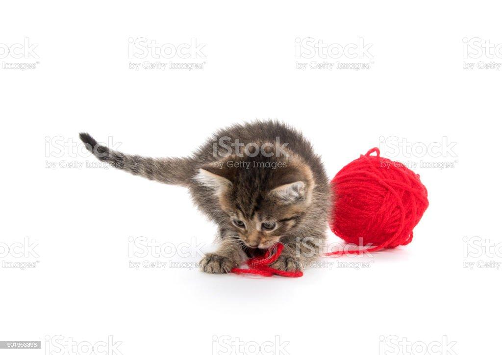 Cute tabby and ball of yarn stock photo