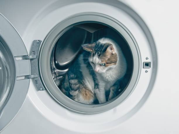 Cute tabby cat hiding in the washing machine picture id1073109496?b=1&k=6&m=1073109496&s=612x612&w=0&h=lfz9img1o4a1z4tnthodu8 yadcwju ho6aacke4tr0=