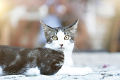 cute tabby cat looking at camera.