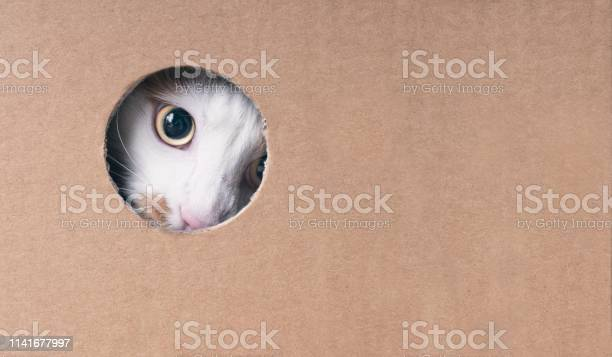 Cute tabby cat looking curious out of a hole in the cardboard box picture id1141677997?b=1&k=6&m=1141677997&s=612x612&h=dnssksctofij60 e ujnm5hnz0cywgxcud8vzinntge=