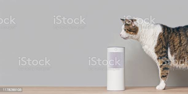 Cute tabby cat looking curious to a voice controlled smart speaker picture id1178285105?b=1&k=6&m=1178285105&s=612x612&h=cbp1ow9wo9u tcedn9jd 3dql4r8eno70piqopmvnoq=