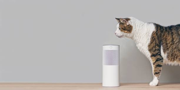 Cute tabby cat looking curious to a voice controlled smart speaker. Panoramic image with copy space. Cute tabby cat looking curious to a voice controlled smart speaker. Panoramic image with copy space. smart speaker stock pictures, royalty-free photos & images