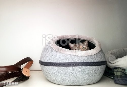 Just eyes and ears visible on this adorable kitty sticking out of a cozy cat bed