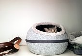 istock Cute Tabby Cat (Dilute Tortie) poking out of a cave-style cat bed 1216861895