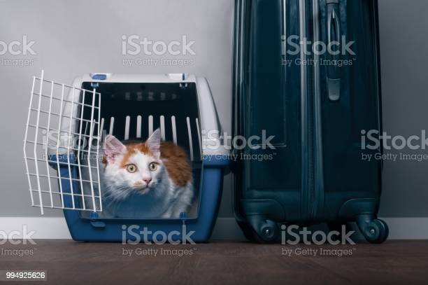Cute tabby cat sit in a travel crate beside a suitcase and look picture id994925626?b=1&k=6&m=994925626&s=612x612&h=f1m4b7tp5onqmat1aennwicn9qv tyhr2a3rftoai9o=