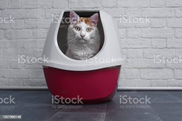 Cute tabby cat using a red closed litter box picture id1007990148?b=1&k=6&m=1007990148&s=612x612&h=rulfeah7hzdacarpl5a0shid 7fvii 8fk7pa4fcn2e=