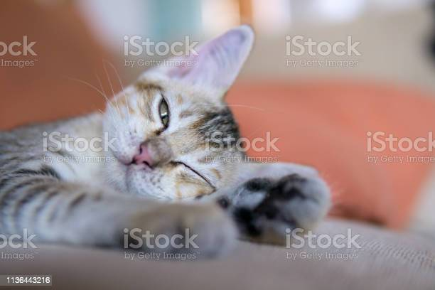 Cute tabby kitten lying on sofa couch potato picture id1136443216?b=1&k=6&m=1136443216&s=612x612&h=dalx6f a rcnvcdor5uo7xt0wrgv9dzj7gh5ipnuf70=