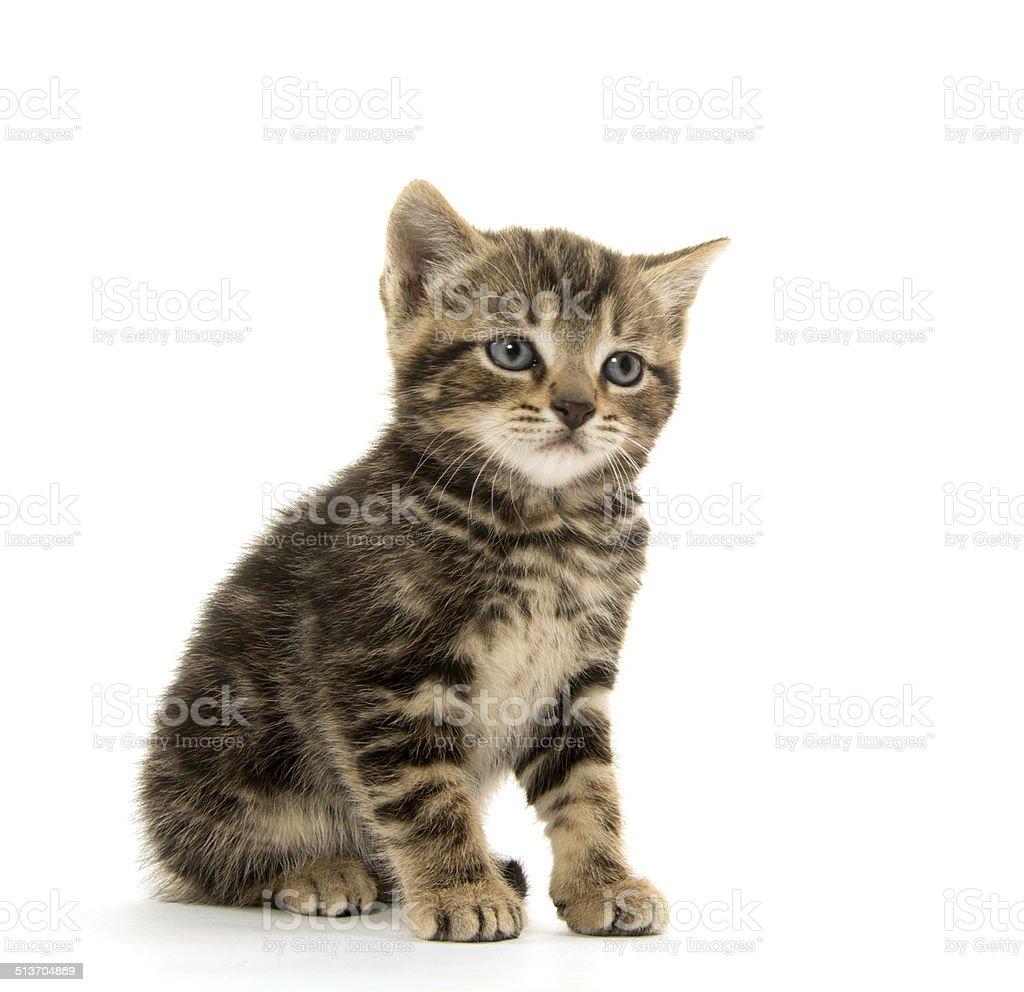 Cute tabby kitten on white stock photo