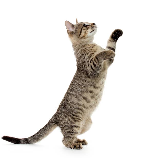 Cute tabby kitten picture id185676355?b=1&k=6&m=185676355&s=612x612&w=0&h=4numhvgeymrvql6nv9uoli66pjjb9fg4gpkky24orwg=