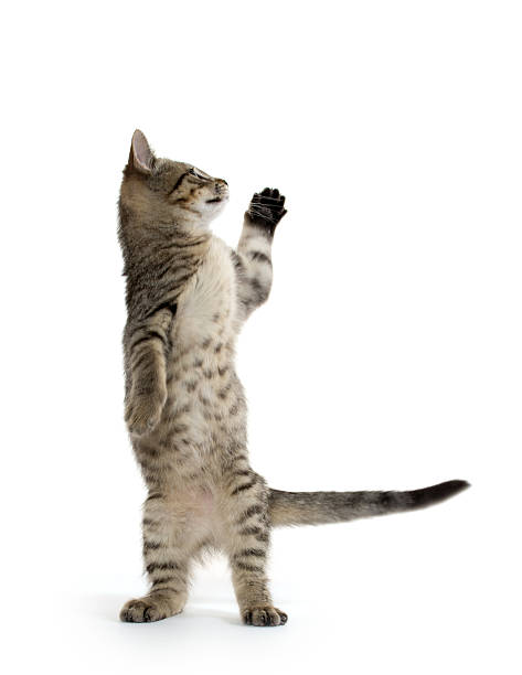 Cute tabby kitten picture id185717152?b=1&k=6&m=185717152&s=612x612&w=0&h= e5tmomgg2xpekubkiizzjs0eauoxnjw3mb2jokngsm=