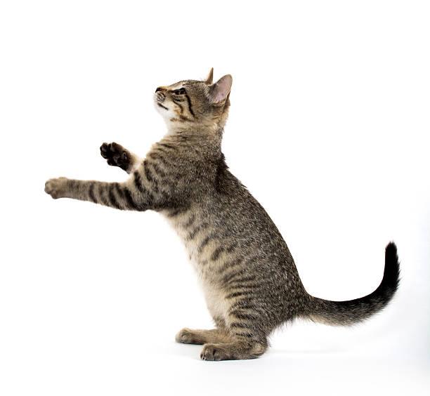 Cute tabby kitten picture id185717631?b=1&k=6&m=185717631&s=612x612&w=0&h=xj0sono9koaczeu  cdq0zikc21h7h3oq l22tg7jl4=