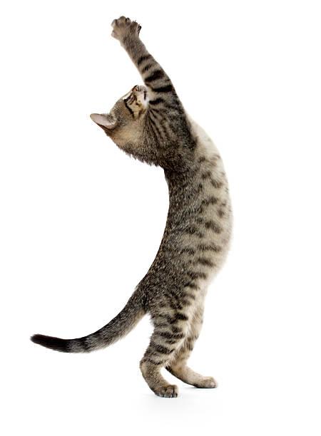 Cute tabby kitten picture id185717646?b=1&k=6&m=185717646&s=612x612&w=0&h=dy74wpa ljkeutjio tbzumnny4dvufqupyj6bs4kmw=