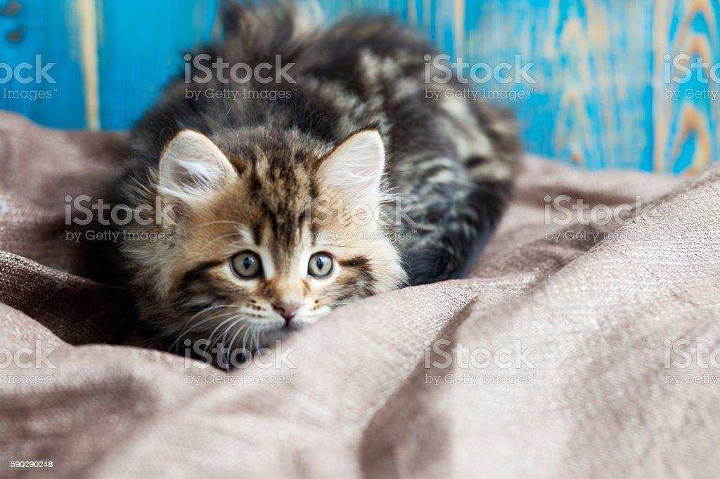 Милый Полосатая кошка kitten  Стоковые фото Стоковая фотография
