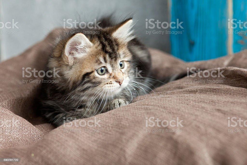 Cute tabby kitten royaltyfri bildbanksbilder