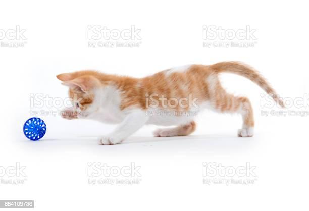 Cute tabby kitten picture id884109736?b=1&k=6&m=884109736&s=612x612&h=dzi8ejwjerqo1unrexpv dokab5iwwntv9izffmfbbo=