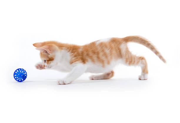 Cute tabby kitten picture id884109736?b=1&k=6&m=884109736&s=612x612&w=0&h=puirxxa  s3b8yib6pnvxajffyqk 2nlspykpacigfm=