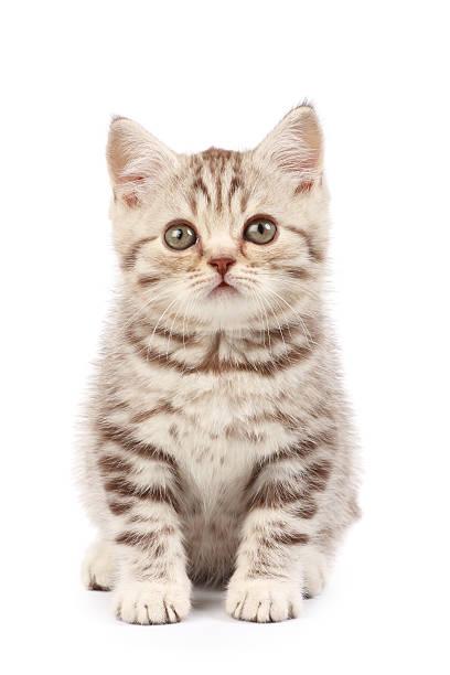 Cute tabby kitten picture id89157141?b=1&k=6&m=89157141&s=612x612&w=0&h=xhnqdxz3gukvvma7nboywza1howoztsxt51zx3rntzi=