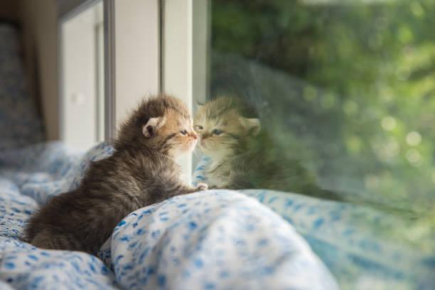 Cute tabby kitten sitting picture id656923270?b=1&k=6&m=656923270&s=612x612&w=0&h=oqjrdpyrai hj1nkctd5ycv yz3w6luwyfpwaddyav8=