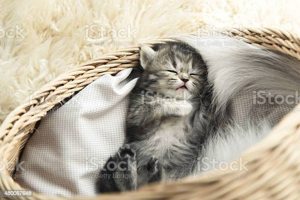 Cute tabby kitten sleeping picture id480067648?b=1&k=6&m=480067648&s=612x612&h=ho75aiysrvkonh7nhwfrkx4az59jc5sjeo7ydpbfiek=