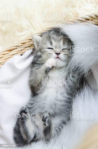 Cute tabby kitten sleeping picture id480615730?b=1&k=6&m=480615730&s=612x612&h=gj4hnh0hscazi8hz5ea1fdcxpbp8anysk7vodj5sjuk=