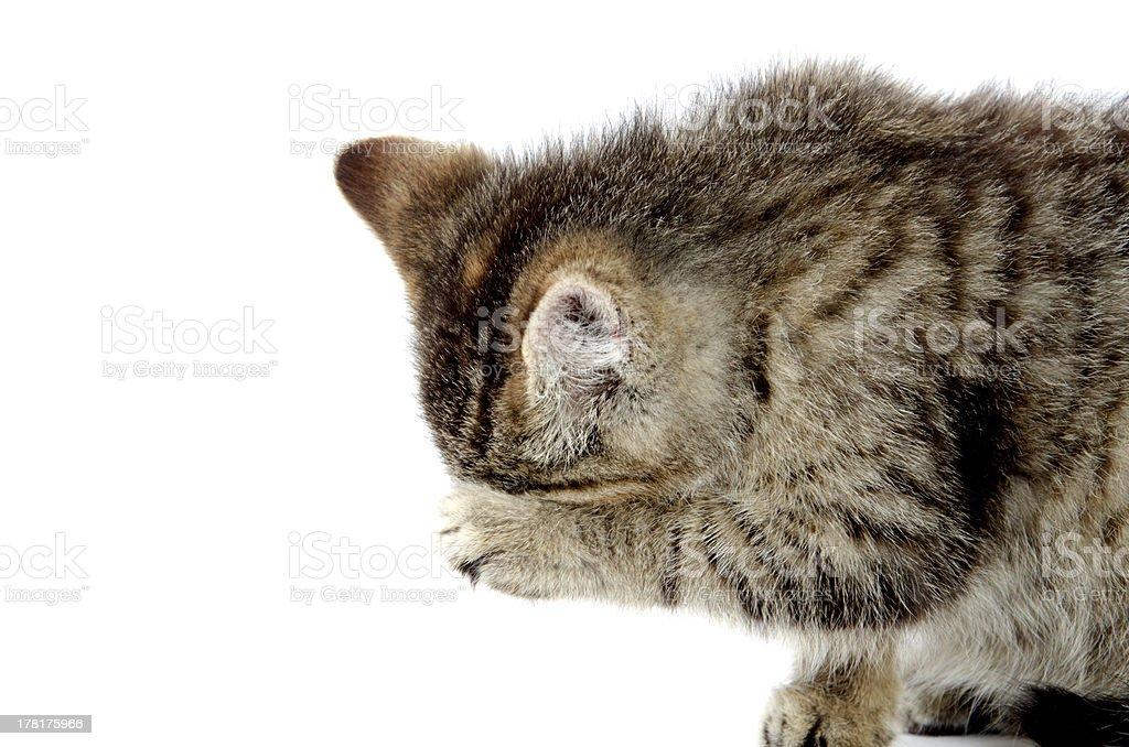 Cute tabby kitten wiping its eyes stock photo