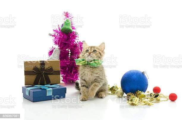 Cute tabby kitten with present picture id526357031?b=1&k=6&m=526357031&s=612x612&h=1nukmofwjzwjcgm0jlscrj1bfihsjmanp1a8dg0mmxo=