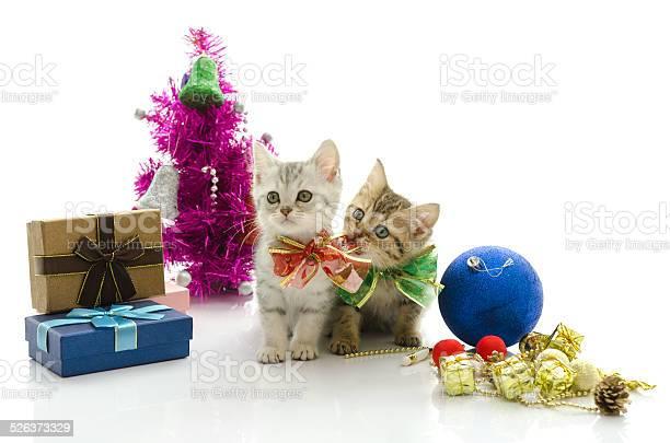 Cute tabby kitten with present picture id526373329?b=1&k=6&m=526373329&s=612x612&h=zgntt  ykimsz1czpkwhjoyr981d kpg1yqlbeqk27e=