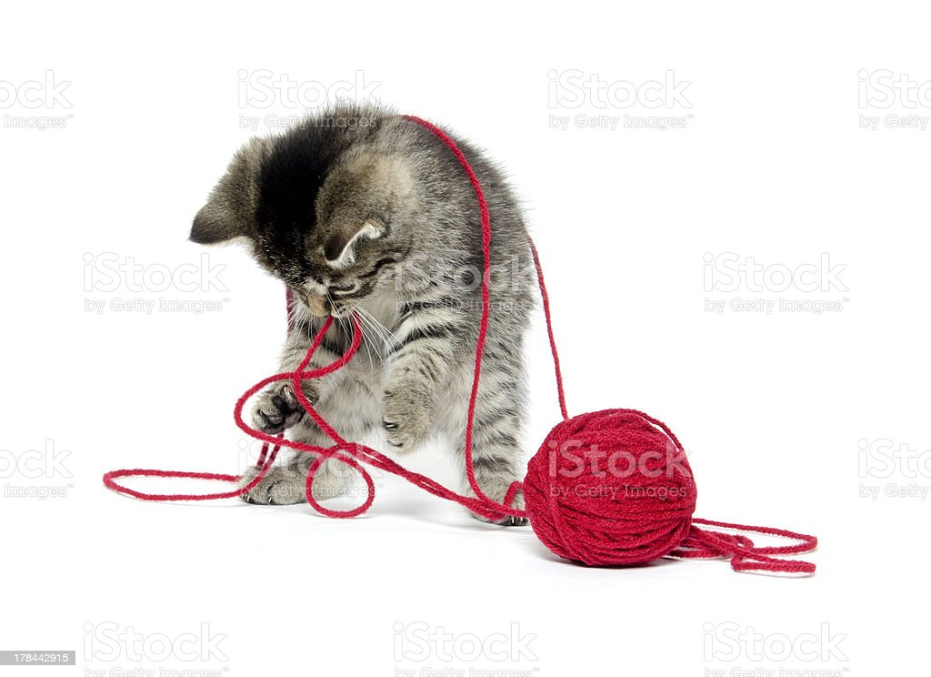 cute tabby kitten with yarn stock photo