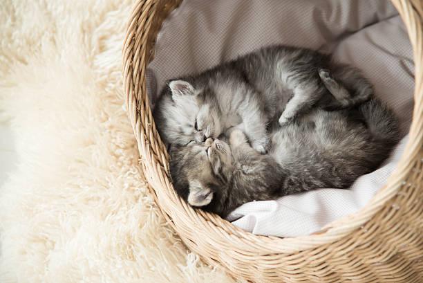 Cute tabby kittens sleeping and hugging picture id480067630?b=1&k=6&m=480067630&s=612x612&w=0&h=hojnzoyvolvsvnx6ubytblkoerio cbqpwvqhtks1m8=